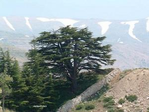 Enjoy Lebanon Tour In 07 Nights /08 Days Packages