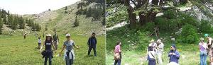 Hiking groups at Al Chouf Reserve