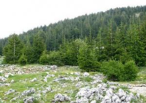 Hike At Al Chouf Cedars Reserve